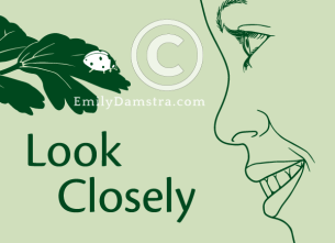 Look Closely – Emily S. Damstra