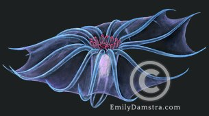 deep sea swimming sea cucumber illustration