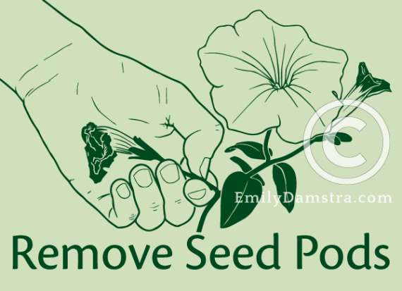 Remove Seed Pods illustration