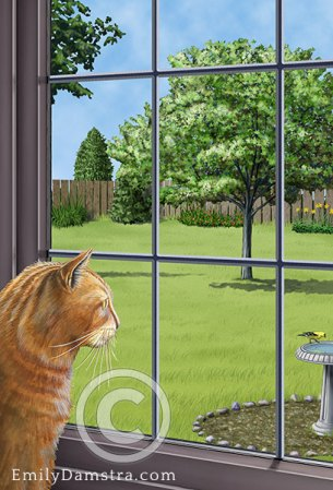 Illustration indoor cat looking out window