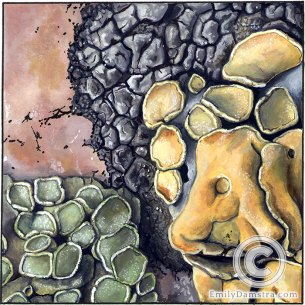 lichens granite illustration