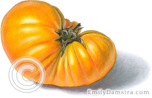Orange heirloom tomato – Emily S. Damstra