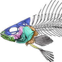 anatomy life cycle illustrations