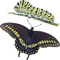 invertebrate insect illustrations