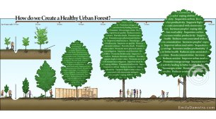 urban forest tree care illustration