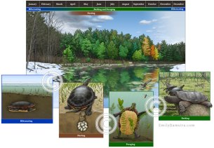 Illustration turtle habitat
