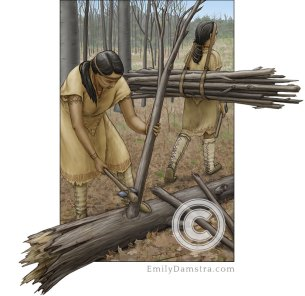 Neutral indigenous women collecting wood
