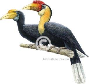 Wrinkled hornbills – Emily S. Damstra