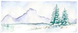 december : blue spruce