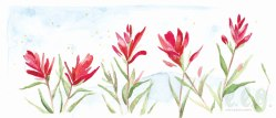 march : indian paintbrush
