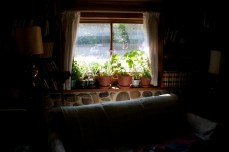 Plants he started himself from cutting adorn the windowsill.