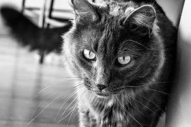 catbw