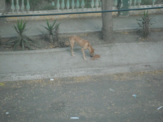 Dog on sidewalk eating food