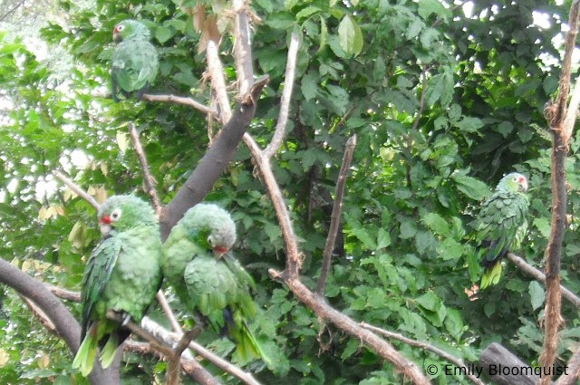 Free parrots in trees