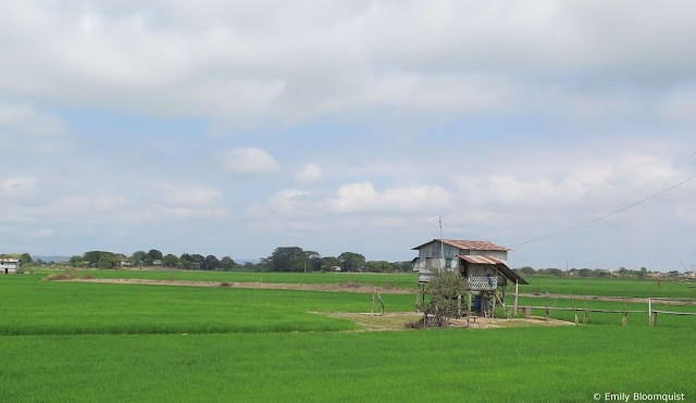 Stilted home in rice field