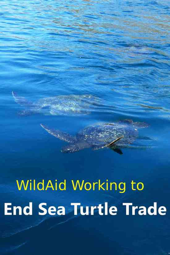 WildAid working to end sea turtle trade in China