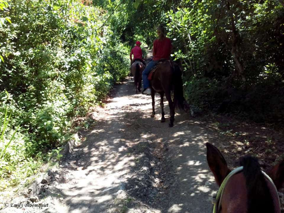 Horseback riding La Curia Trail
