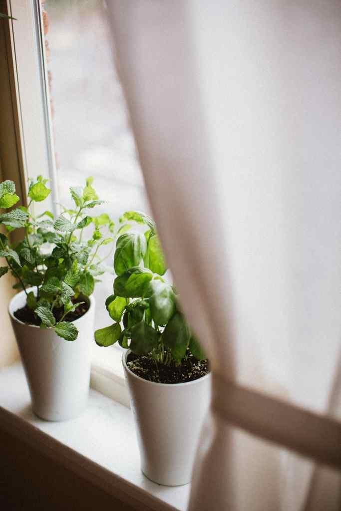 Herb Garden in Window