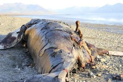 Alaska Travel Kincaid Park Beached Whale 8