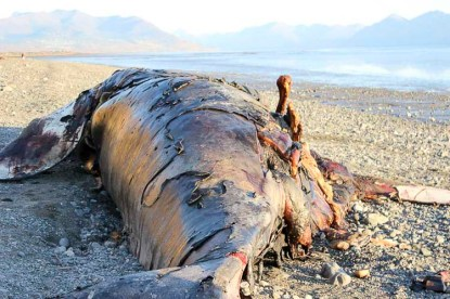 Alaska Travel Kincaid Park Beached Whale 8