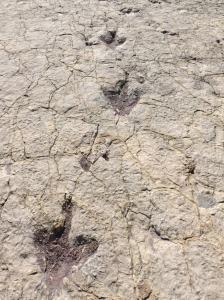 Dinosaur Footprints - Umajalanta, Torotoro