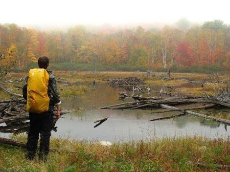backpack, hike, lake, forest