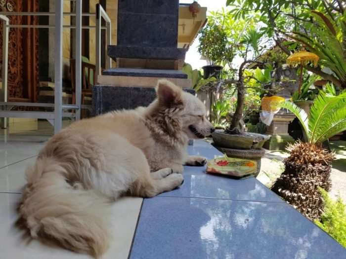 What Things Cost in Ubud - Where to Stay