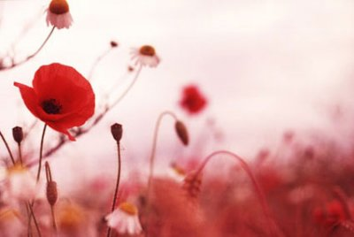 Remembrance Day, Remember, Pay Tribute, Honour Soldiers, Love, Legacy, Emily Madill