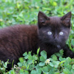 Three kittens under the car… and other tales from the farm
