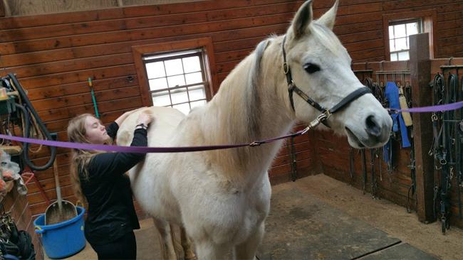 Theraputic horse backriding milton ga
