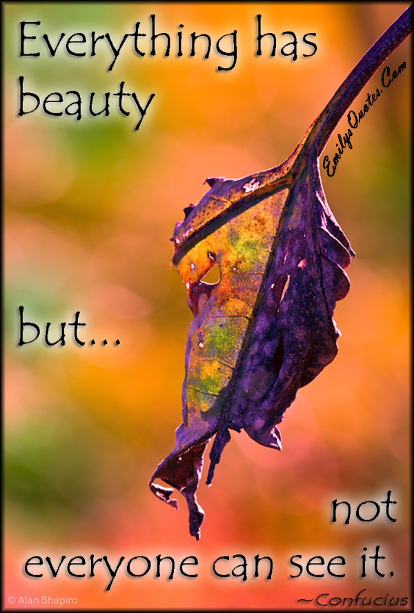 Everything has beauty but not everyone can see it ...