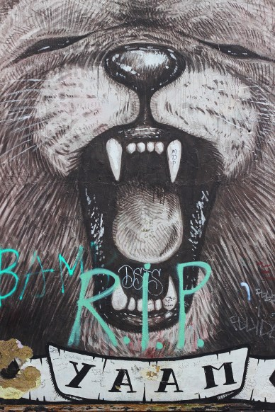 Berlin Street Art Bear