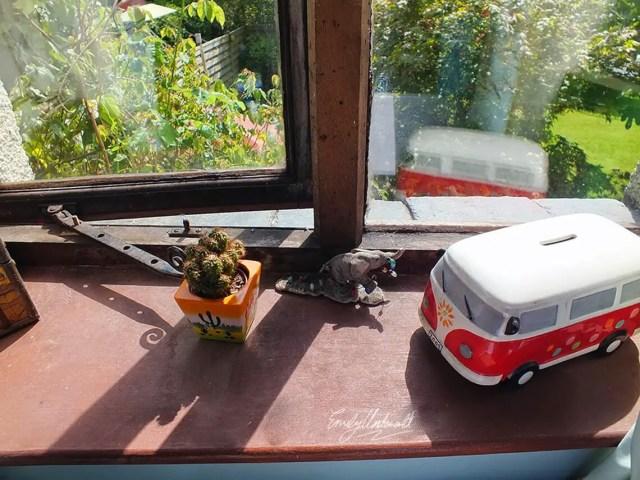whats-on-my-windowsill