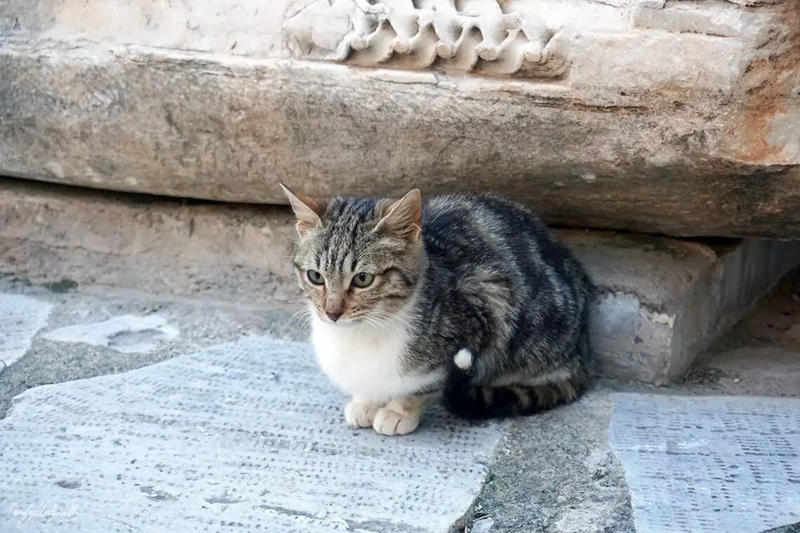 delphi-cat