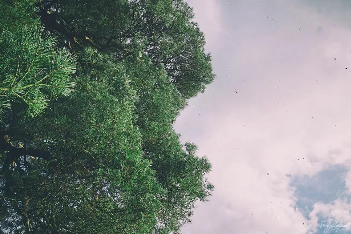 trees-sky