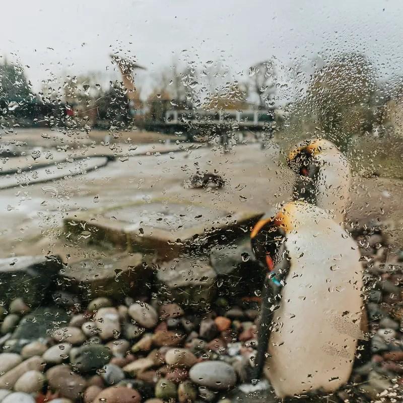 Edinburgh Zoo Penguins Parade