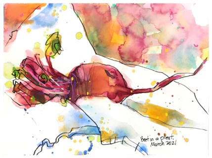 watercolor painting of beet by emily weil