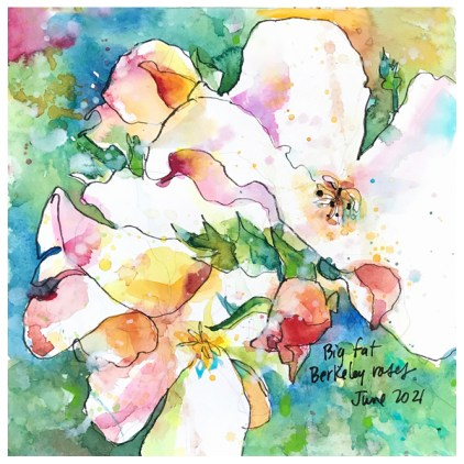 watercolor and ink drawing of roses by emily weil
