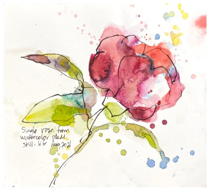 watercolor painting of rose by emily weil