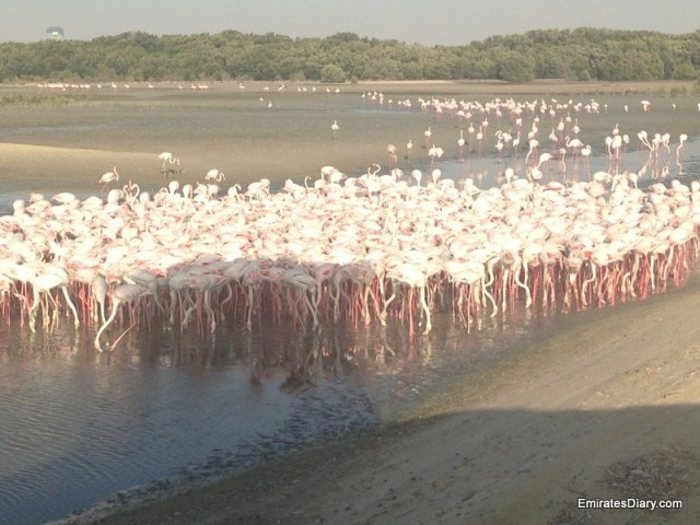 ras-al-khor-wildlife-santuary-pictures-05