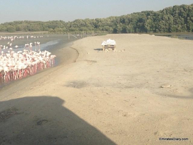 ras-al-khor-wildlife-santuary-pictures-09