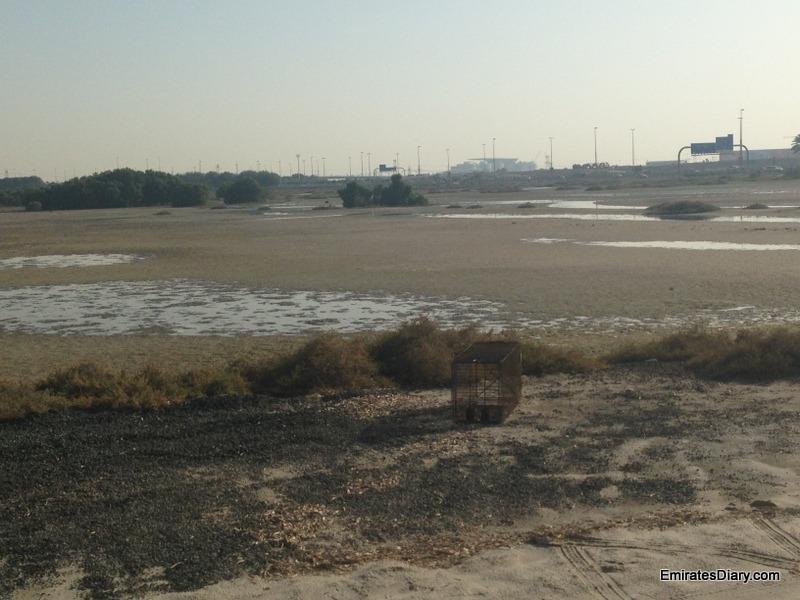 ras-al-khor-wildlife-santuary-pictures-14