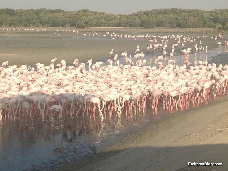 ras-al-khor-wildlife-santuary-pictures-17