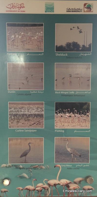 ras-al-khor-wildlife-santuary-pictures-21