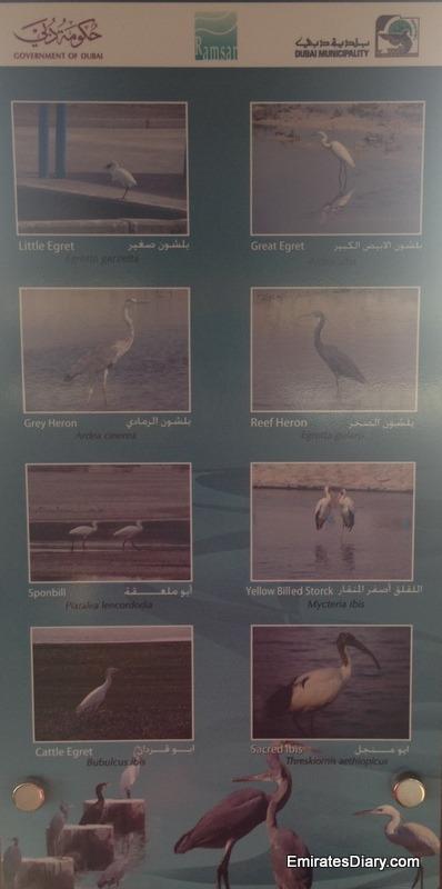 ras-al-khor-wildlife-santuary-pictures-22