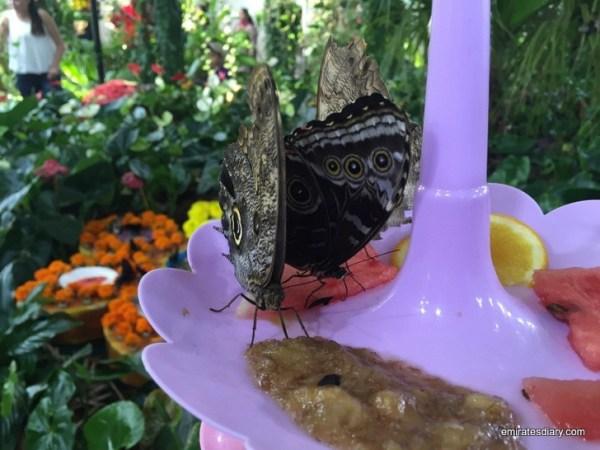 18-butterfly-garden-dubai-pictures-2015-emiratesdiary-018