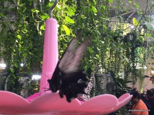 41-butterfly-garden-dubai-pictures-2015-emiratesdiary-041