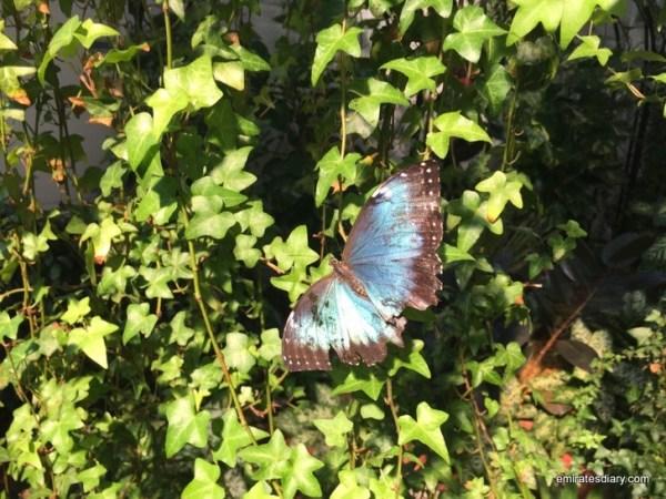 68-butterfly-garden-dubai-pictures-2015-emiratesdiary-068