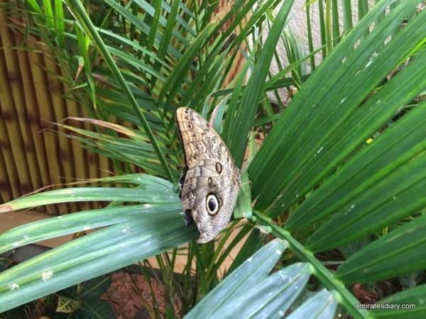 69-butterfly-garden-dubai-pictures-2015-emiratesdiary-069