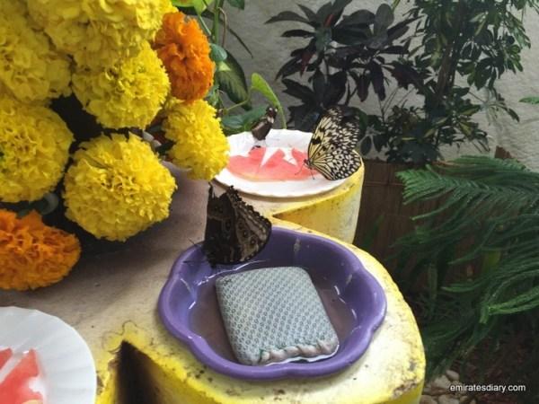 70-butterfly-garden-dubai-pictures-2015-emiratesdiary-070